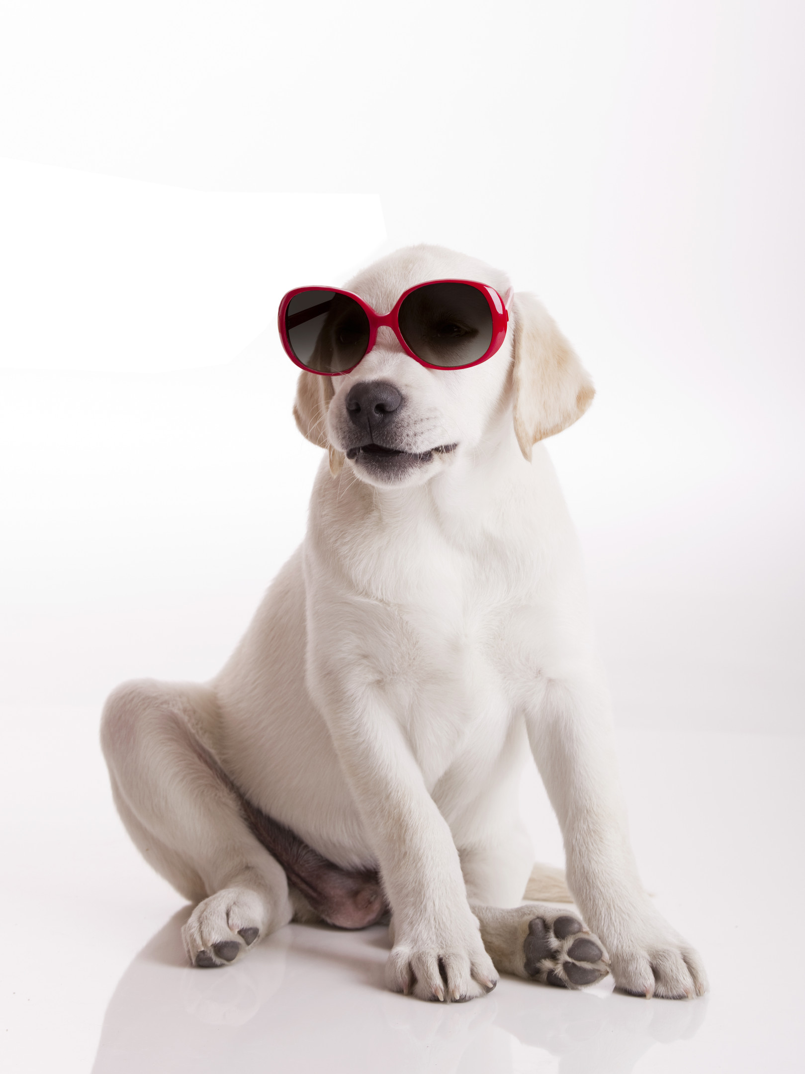Pets Dog Sunglasses