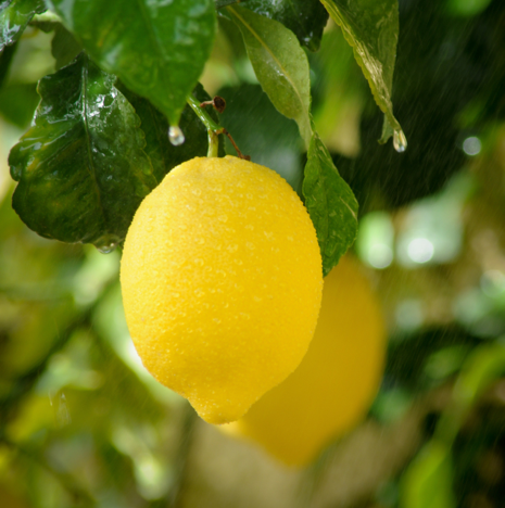 FP Food Recipe Lemon Wellness