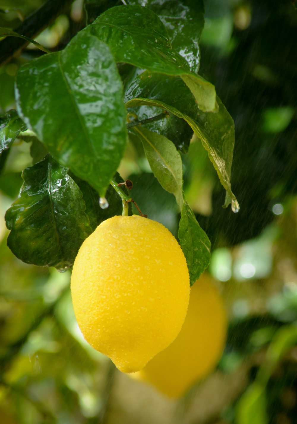Lemon-Fresh Wellness Tips